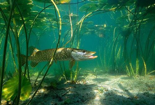 В подводном лесу.