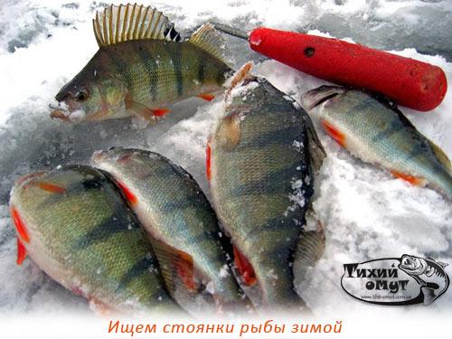 Ищем стоянки рыбы зимой
