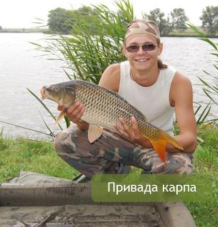 привада для рыбы прикормка для леща