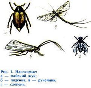 как ловить насекомых видео