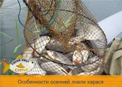 рыбалка на карася летом в подмосковье