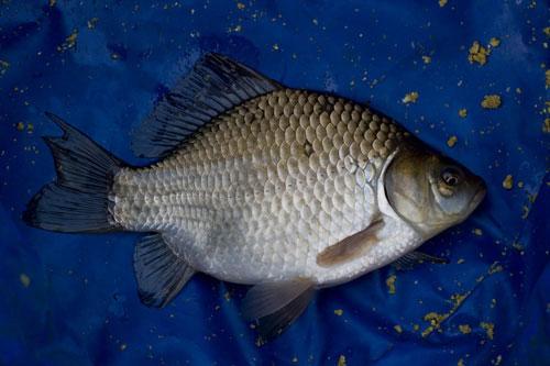 как развести прикормку для рыбалки видео
