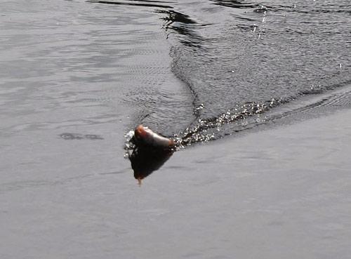Пикер на осенней реке