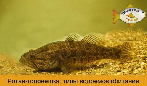 Ротан-головешка: типы водоемов обитания