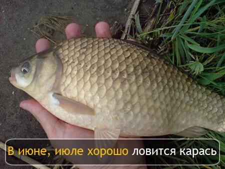 клюет ли рыба после нереста