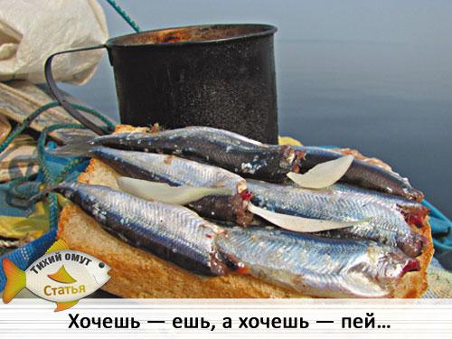 рыбалка в низовьях енисея новое