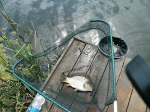 Рыбалка на карася прикормка своими руками