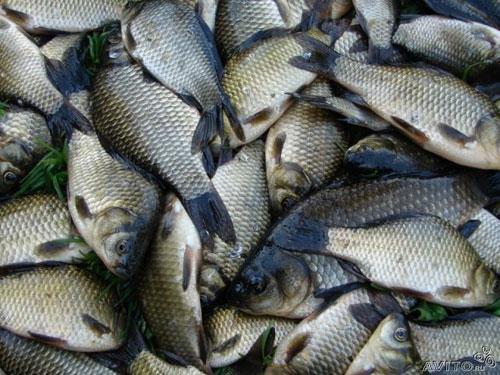 прикормка из манки для ловли рыбы