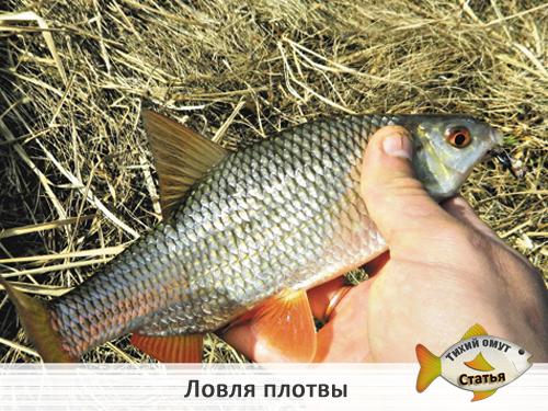 прикормка для озерной рыбы