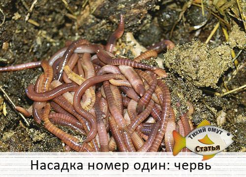 На что ловить кроме червя