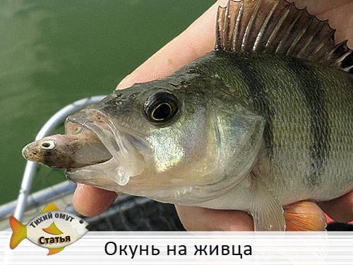 Объявлен набор в рыбный патруль Киева и Киевской области, - Госагентство рыбного хозяйства - Цензор.НЕТ 1138