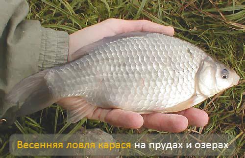 на что клюет рыба весной