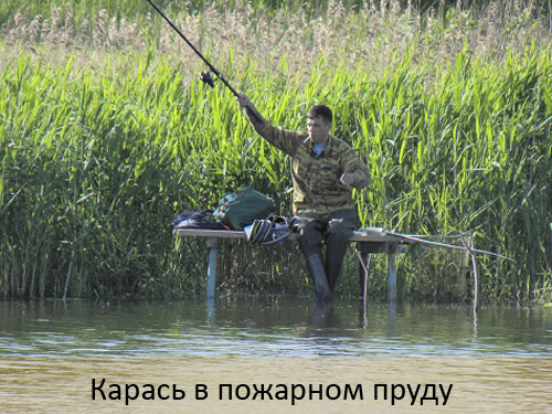ловля карася в жару на прудах