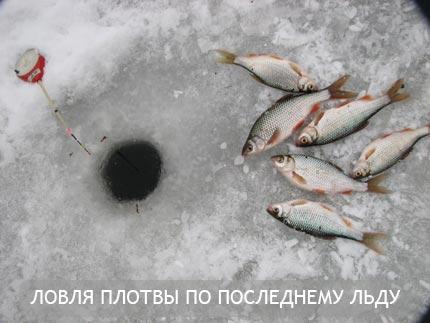 Ловля плотвы по последнему льду