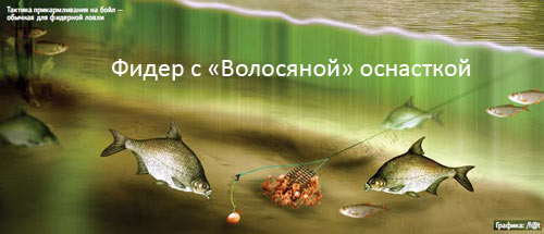 арахис прикормке для рыбы