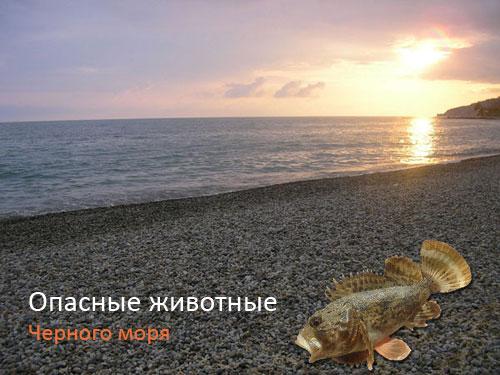 Опасные животные Черного моря
