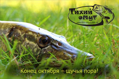 Конец октября – щучья пора! Рыбалка на щуку осенью