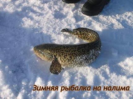 Зимняя рыбалка на налима