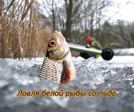 Ловля белой рыбы со льда
