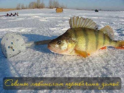 Советы любителям порыбачить зимой