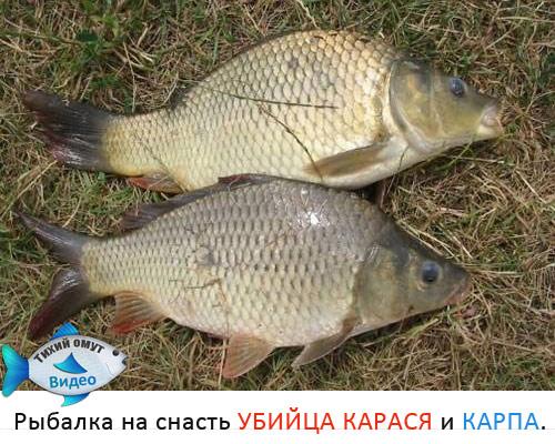Рыбалка на снасть УБИЙЦА КАРАСЯ и УБИЙЦА КАРПА