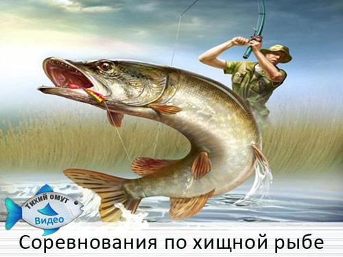 Соревнования по хищной рыбе