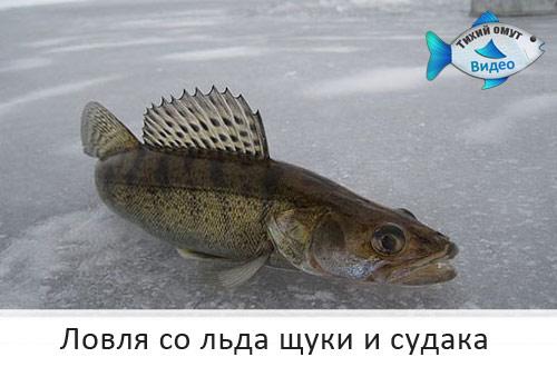 Ловля со льда щуки и судака