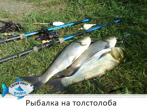 рыбалка на толстолоба весной видео