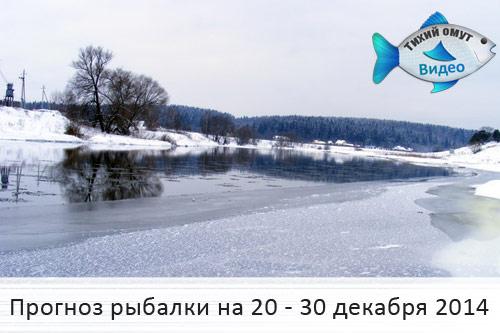 прогноз клева в лысково нижегородской области