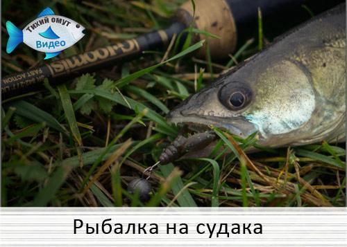 рыбалка в камышах михалыч