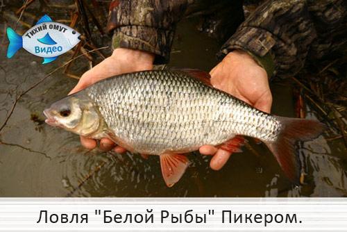 рыбалка на белую рыбу в украине