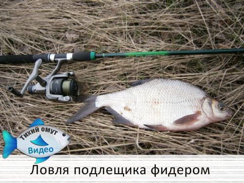 Ловля подлещика фидером на Русановском проливе.
