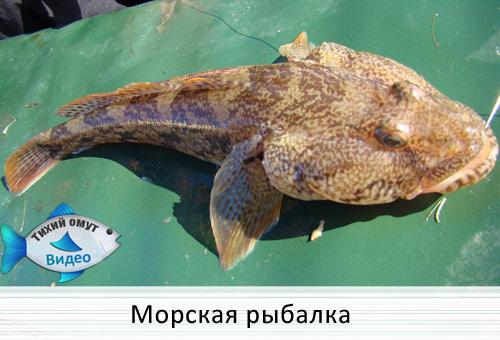 Морская рыбалка на искуственные приманки