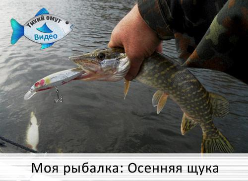 передача о рыбалке на щуку