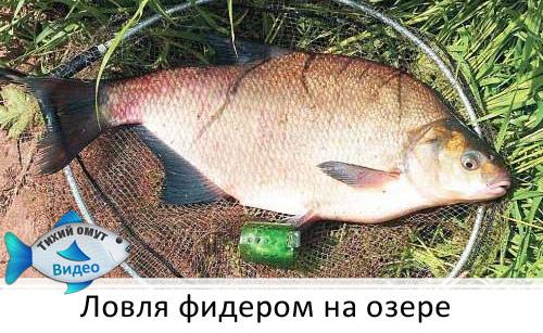 Ловля фидером на озере.