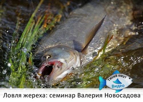 Ловля жереха: семинар Валерия Новосадова