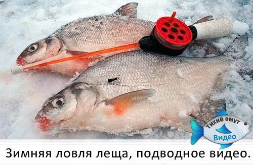 Зимняя ловля леща, подводное видео.