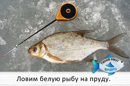 Ловим белую рыбу на пруду.