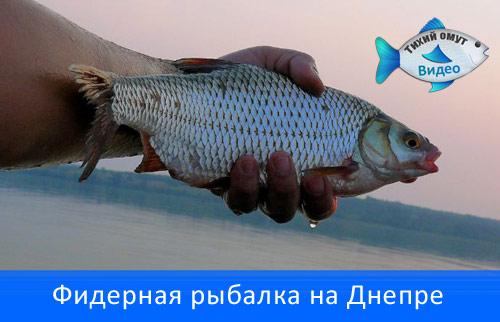 Фидерная рыбалка на Днепре