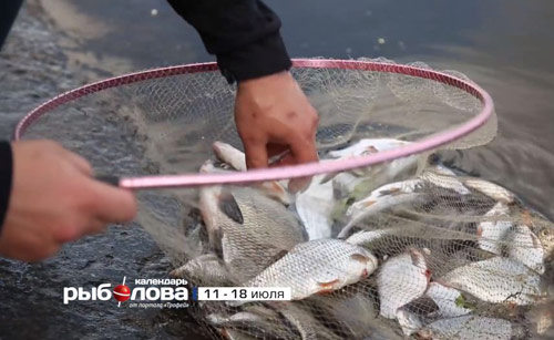 Календарь рыболова с 11 июля по 18 июля 2016 года