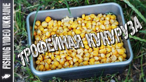 Кукуруза для трофейной рыбы | Ферментация кукурузы
