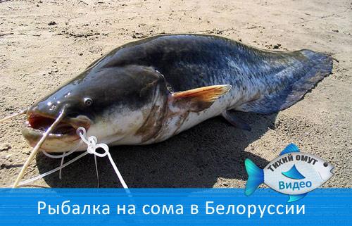 Рыбалка на сома в Белоруссии