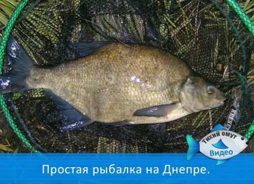 Простая рыбалка на Днепре