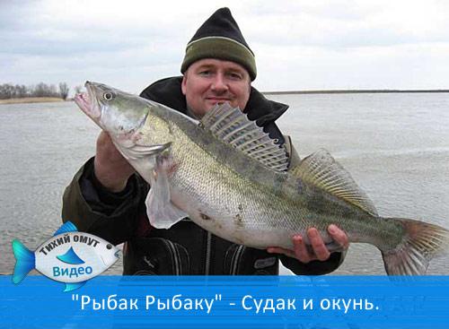 рыбак с судаком