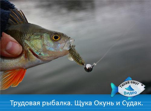 Трудовая рыбалка. Щука Окунь и Судак.