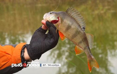 Календарь рыболова с 07 ноября по 14 ноября