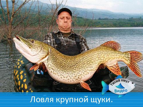 ловля самой крупной рыбы в мире видео