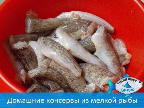 Как из мелкой рыбы сделать консервы