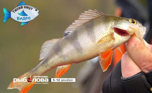 Календарь рыболова с 05 декабря по 12 декабря 2016