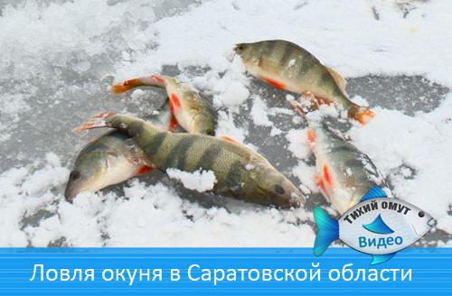 Ловля окуня в Саратовской области
